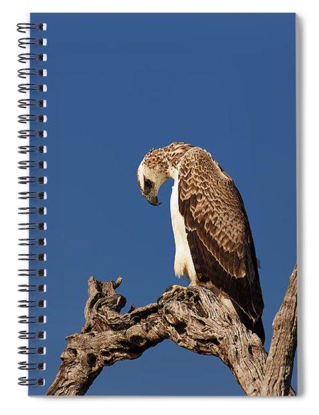 Martial Eagle Spiral Notebook