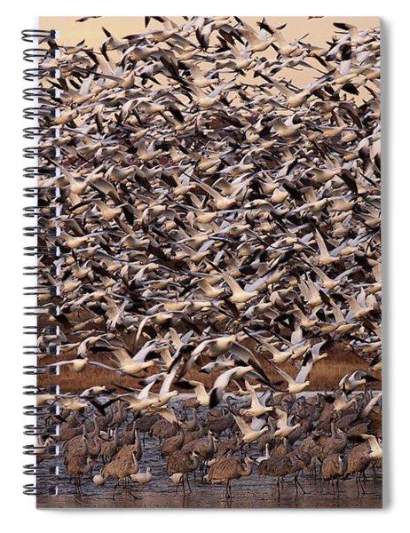 Mass Exodus Spiral Notebook
