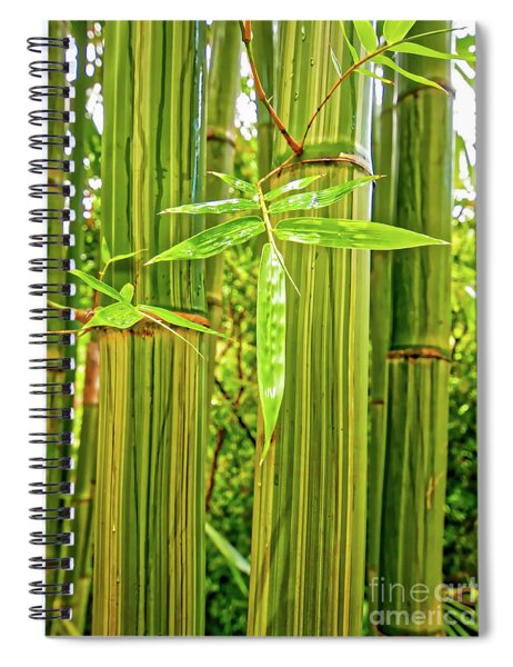 Maui Bamboo  Spiral Notebook