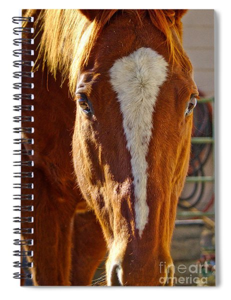 Mccool, Grandson Of Secretariat Spiral Notebook