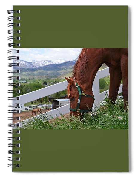 Mccool Grazing Spiral Notebook