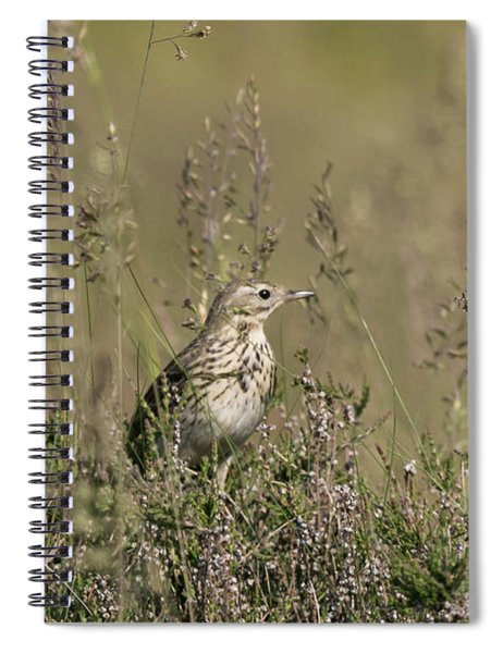 Meadow Pipit Spiral Notebook