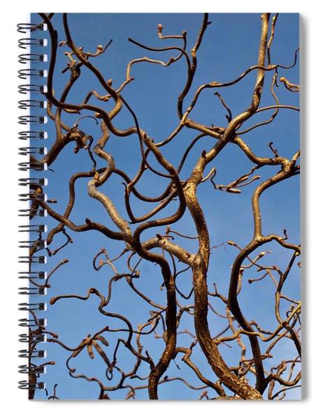 Medusa Limbs Reaching For The Sky Spiral Notebook