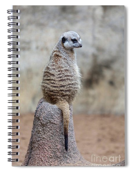 Meerkat Sitting And Looking Right Spiral Notebook