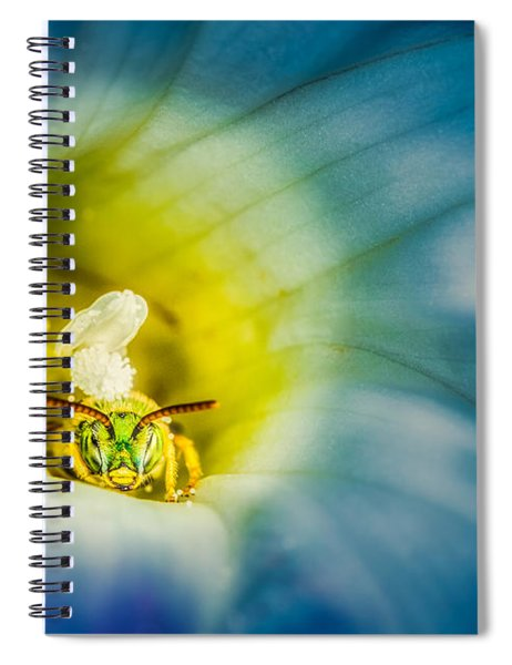 Metallic Green Bee In Blue Morning Glory Spiral Notebook
