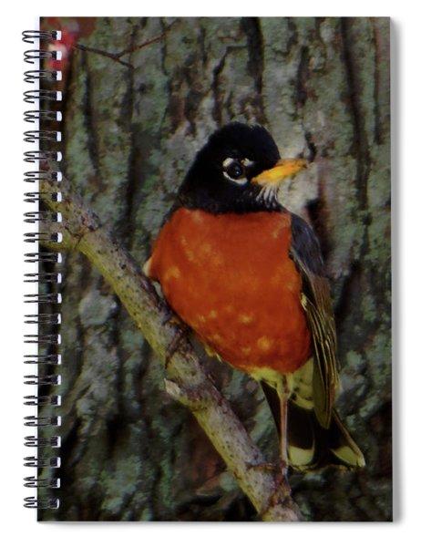 Michigan State Bird Robin Spiral Notebook