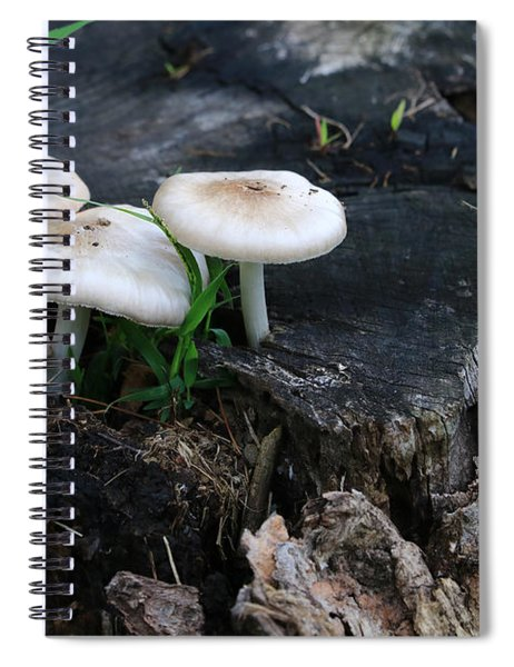Mid Summers Fungi Spiral Notebook