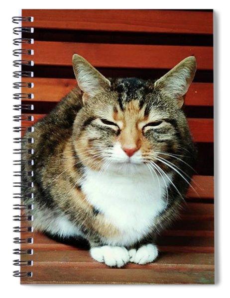 Mindful Cat Pose Spiral Notebook