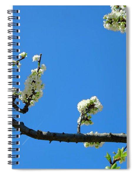 Mirabelle Blossoms Spiral Notebook