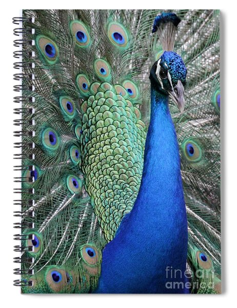 Mister Peacock Spiral Notebook