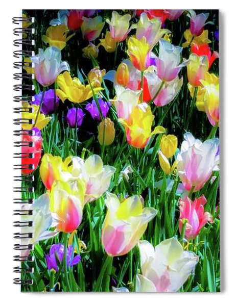 Mixed Tulips In Bloom  Spiral Notebook