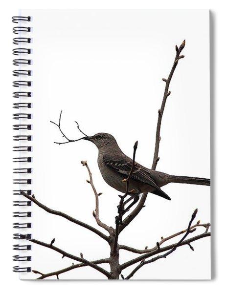 Mockingbird With Twig Spiral Notebook