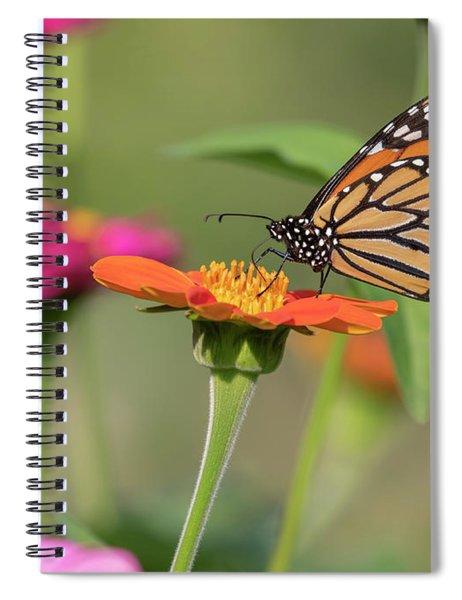 Monarch 2018-10 Spiral Notebook
