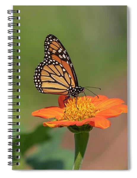 Monarch 2018-14 Spiral Notebook