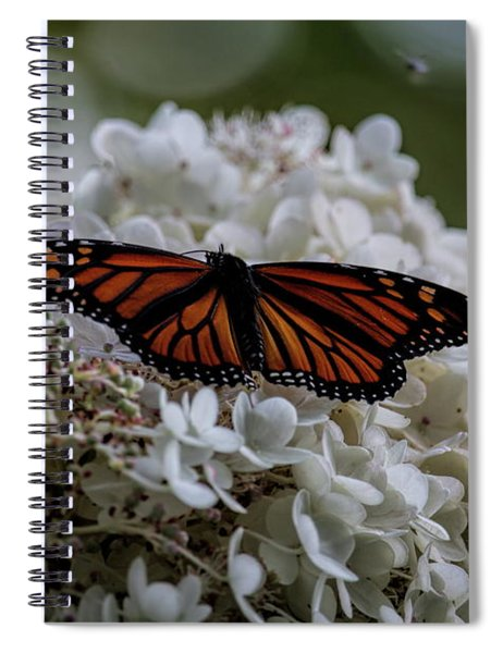 Monarch Butterfly Feeding On Hydrangea Tree Spiral Notebook