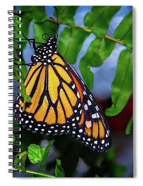 Monarch Feeding Spiral Notebook