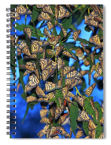 Monarchs Spiral Notebook