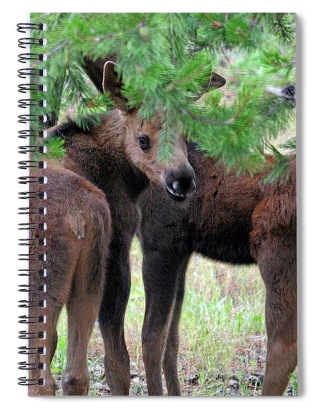 Moose Calves Spiral Notebook