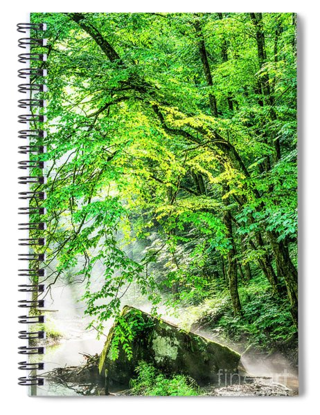 Morning Light In The Forest Spiral Notebook