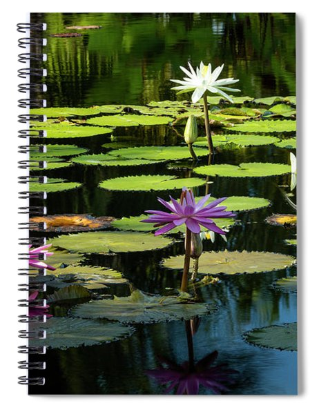 Morning Lily Pads Spiral Notebook