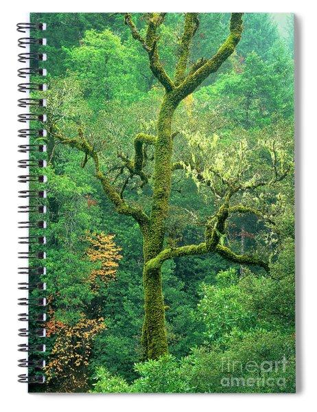 Moss Draped Oak Quercus Spp Central California Spiral Notebook