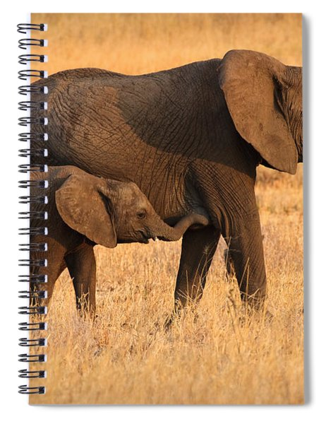 Mother And Baby Elephants Spiral Notebook
