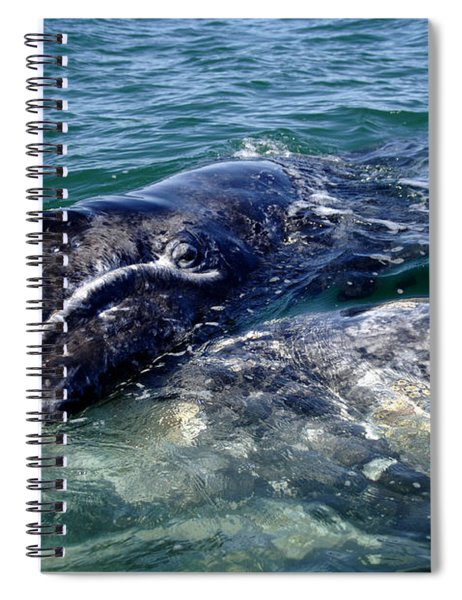 Mother Grey Whale And Baby Calf Spiral Notebook