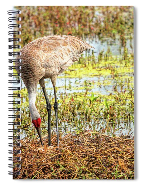 Mother Rearranging Her Eggs In The Nest Spiral Notebook