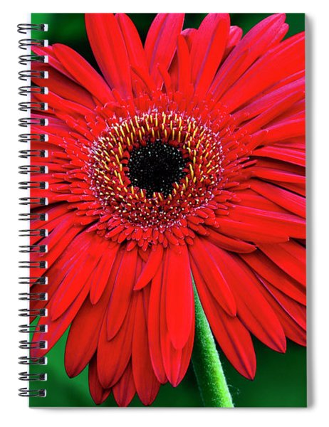 Mother's Day Gerbera Daisy Spiral Notebook