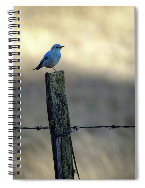 Mountain Bluebird On Wood Fence Post Spiral Notebook