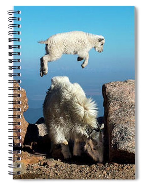 Mountain Goat Leap-frog Triptych Spiral Notebook