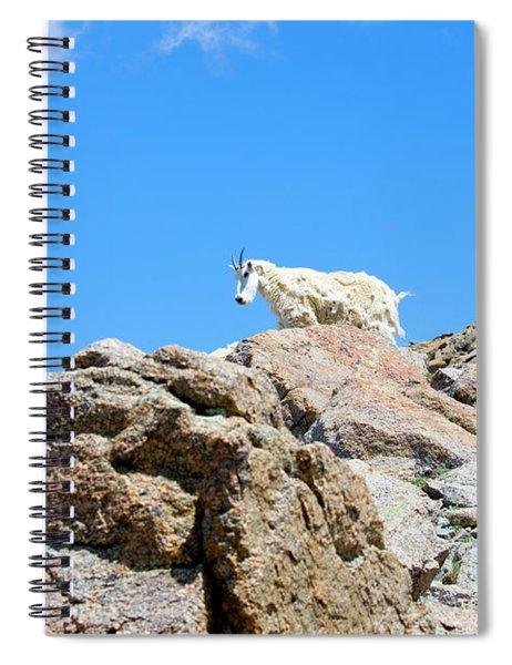 Mountain Goat Standing On Mount Massive Summit Spiral Notebook