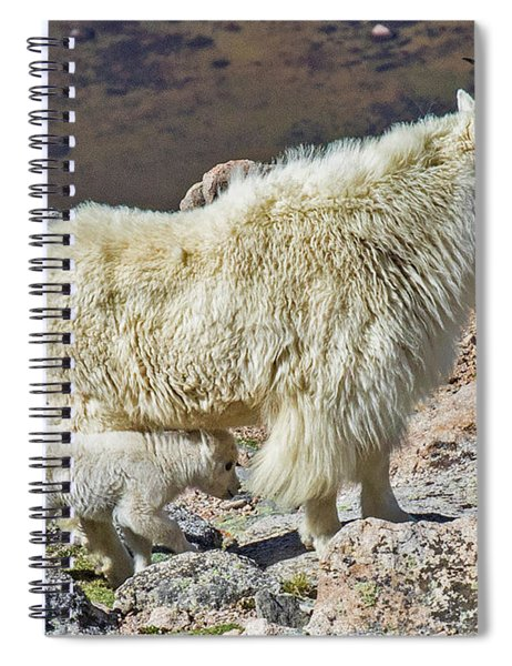 Mountain Goat With Her Kid Spiral Notebook