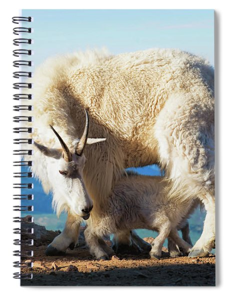 Mountain Goats Nanny And Kid Spiral Notebook