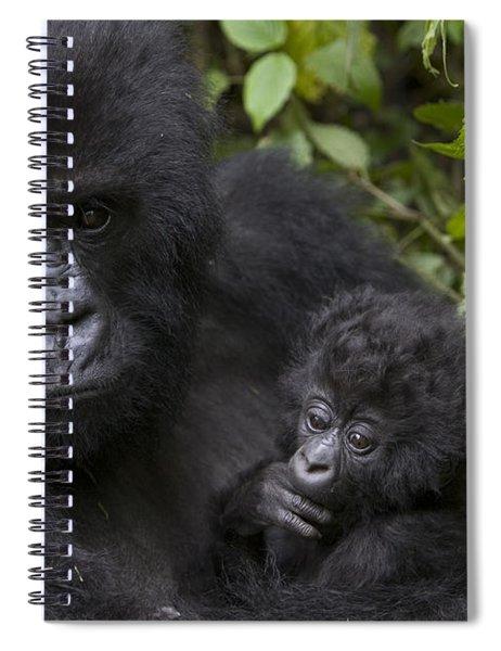 Mountain Gorilla Mother Holding 3 Month Spiral Notebook