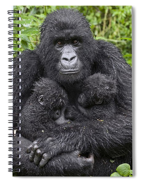 Mountain Gorilla Mother Holding 5 Month Spiral Notebook