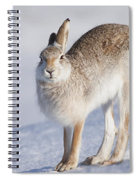 Mountain Hare In The Snow - Lepus Timidus  #2 Spiral Notebook