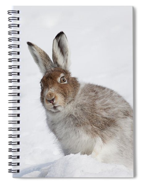 Mountain Hare In Winter Spiral Notebook