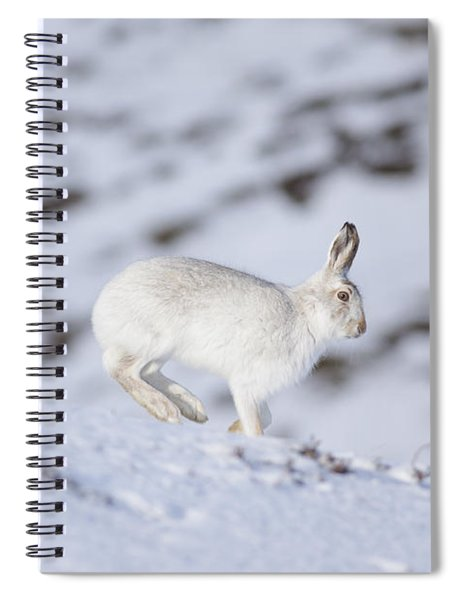 Mountain Hare - Scottish Highlands  #12 Spiral Notebook