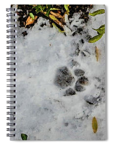 Mountain Lion Tracks In Snow Spiral Notebook