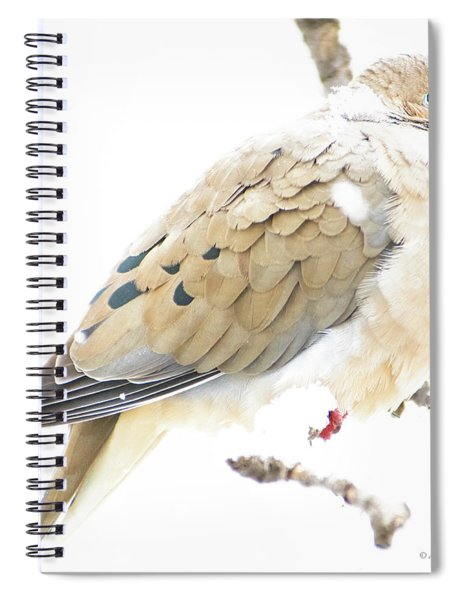Mourning Dove, Snowy Morning Spiral Notebook
