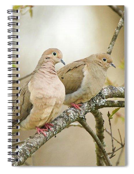 Mourning Doves 4142 Spiral Notebook