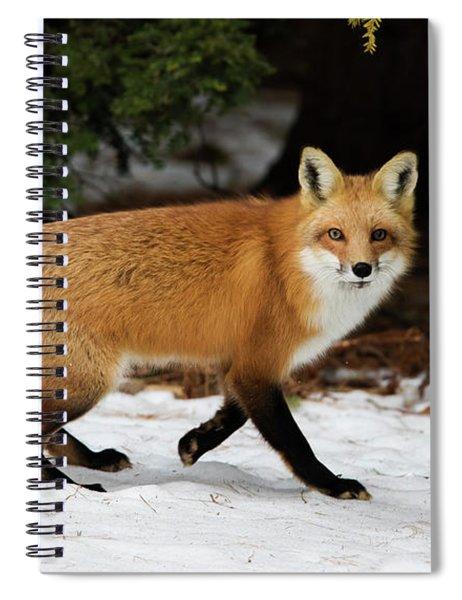 Mr Fox Spiral Notebook