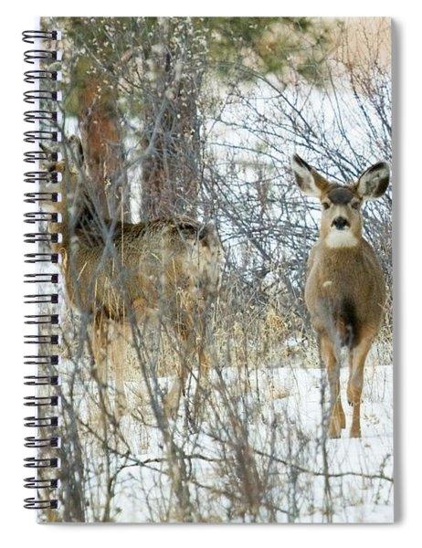 Mule Deer Does In Snow Spiral Notebook