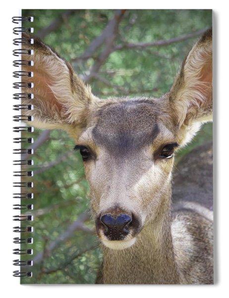 Mule Deer Spiral Notebook