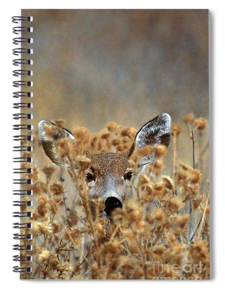 Mule Deer Odocoileus Hemionus Wild California Spiral Notebook