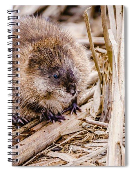 Muskrat Ball Spiral Notebook