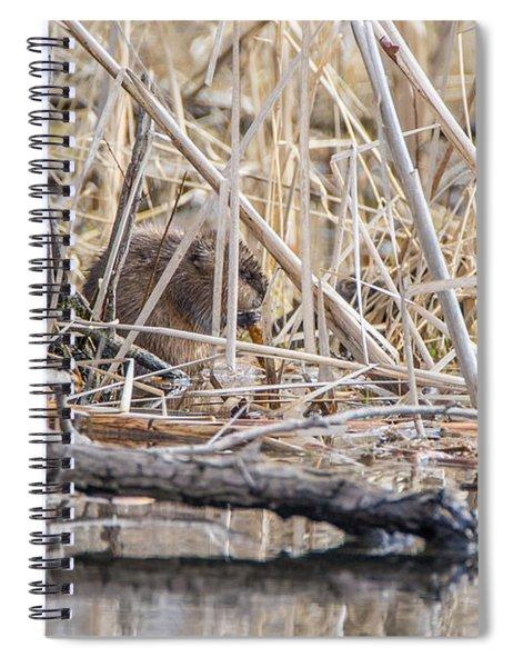 Muskrat Eating A Fish Spiral Notebook