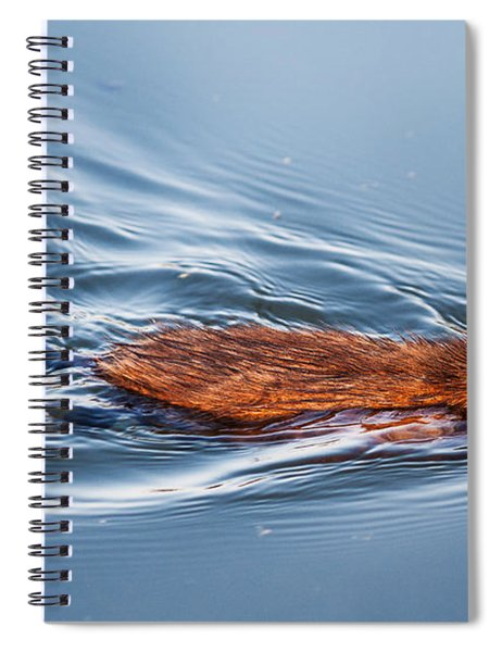 Spiral Notebook featuring the photograph Muskrat Speed Swiming by Edward Peterson