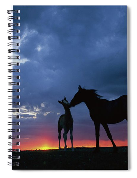 Mustang And Foal At Sunset Spiral Notebook